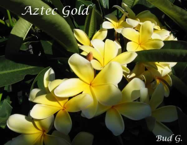 aztec-gold-bg