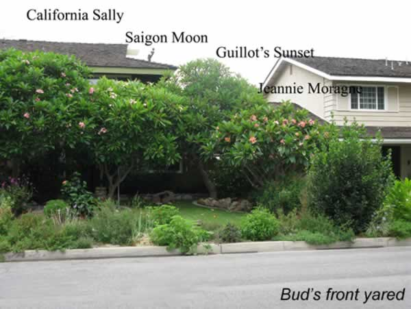 buds-house-1-7-9