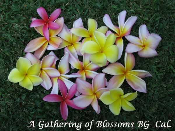 gathering-of-blossoms-jpg