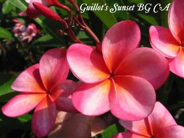 guillots-sunset-bgjpg