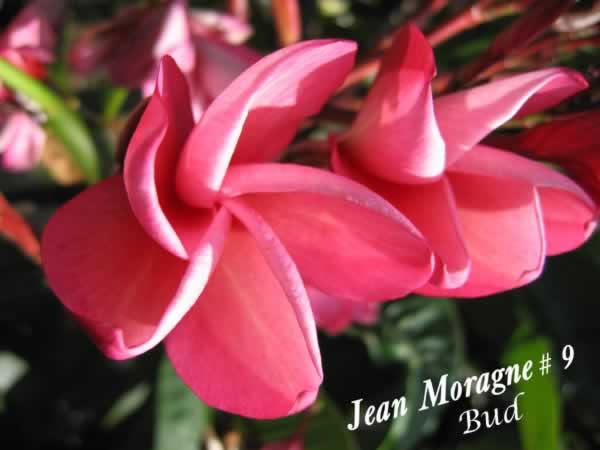 jean-moragne-9-jpg
