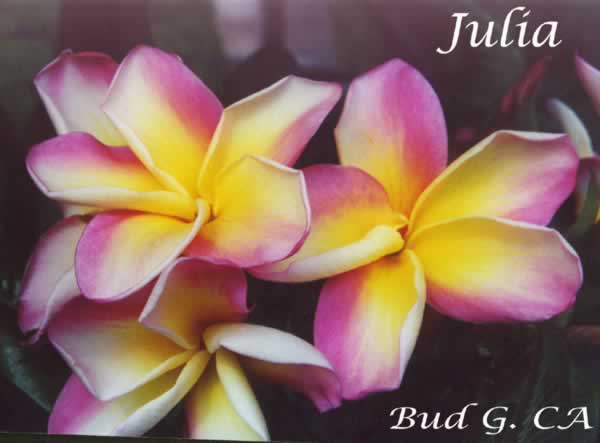 julia-bg