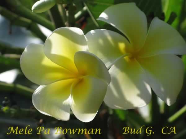 mele-pa-bowman