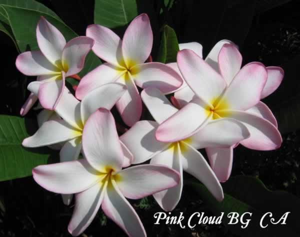 pink-cloudjpg