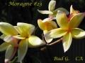 moragne-23