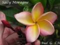 sally-moragne-2-jpg
